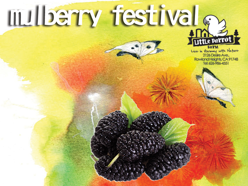 July 14, Mulberry Festival at Little Parrot Farm