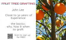 Fruit-Trees-Grafting 0317
