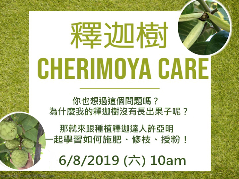 Care tips for Cherimoyas