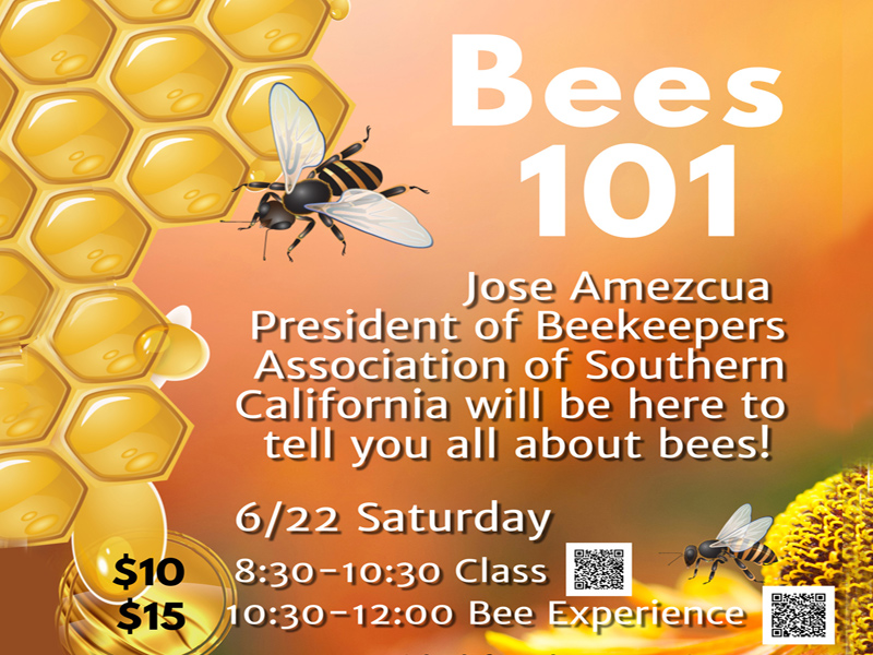 Bee Class and Bee Experience