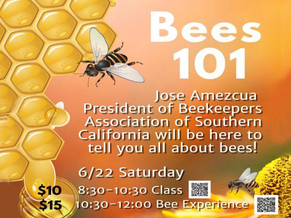 认识蜜蜂及体验